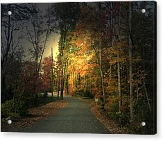 Acrylic Print featuring the photograph Forest Road 2 by Elizabeth Coats