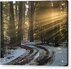 Forest Road Acrylic Print