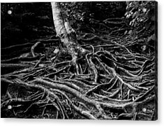 Root Detail Acrylic Print