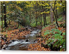 Forest Stream In Autumn Acrylic Print by Stephen  Vecchiotti