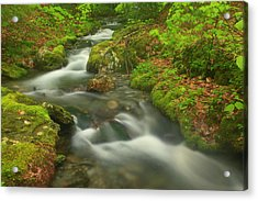 Forest Stream In Spring Acrylic Print