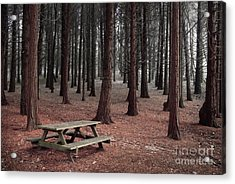 Forest Table Acrylic Print by Carlos Caetano