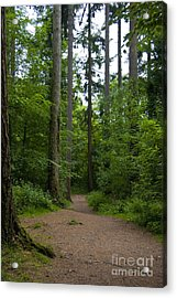 Forest Trail Acrylic Print by Ron Telford