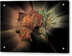 Forever Autumn Acrylic Print by Debra and Dave Vanderlaan
