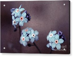Forget Me Not 01 - S05dt01 Acrylic Print by Variance Collections