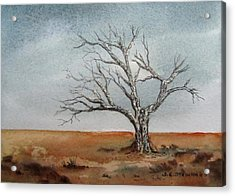 Forgotten Acrylic Print by Sharon Steinhaus