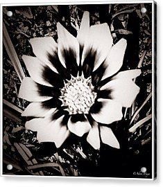 Formal Flower - Tuxed And Ready To Take Acrylic Print