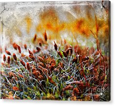 Forrest Of Moss Acrylic Print
