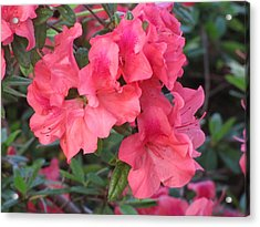 Acrylic Print featuring the photograph Fort Worth Botanical Gardens Springtime by Shawn Hughes