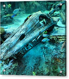 #fossil #hdr #hdr_lovers #creation Acrylic Print by Kel Hill