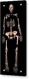 Fossilised Remains, Sima De Los Huesos Acrylic Print by Javier Truebamsf
