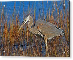 Found An Appetizer Acrylic Print by Mike Martin