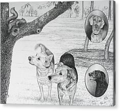 Four Dogs And A Squirrel Acrylic Print