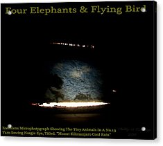 Four Elephants And Flying Bird  Acrylic Print by Phillip H George