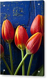 Four Orange Tulips Acrylic Print by Garry Gay