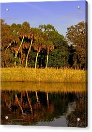 Four Palms Reflecting In Myakka Lake Acrylic Print