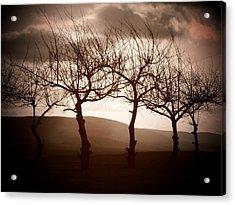 Four Trees Acrylic Print by Michael L Kimble