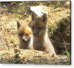Fox Den Dawn Acrylic Print by Chuck Berk