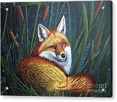 Fox In Cat Tails Acrylic Print by Terri Maddin-Miller