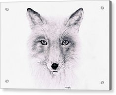 Acrylic Print featuring the drawing Fox by Lucy D