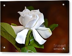Fragrant Flower Acrylic Print by Jiss Joseph