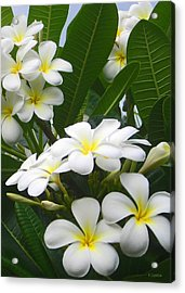 Acrylic Print featuring the photograph Fragrant White Plumeria by Kerri Ligatich