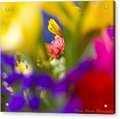 Framed Acrylic Print by Charles Warren
