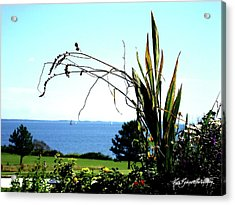 Framing The Bay Acrylic Print by Ruth Bodycott