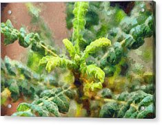Frankincense Tree Leaves Acrylic Print
