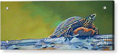 Frank's Turtle Acrylic Print by Tracy L Teeter