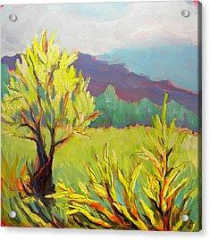 Frazier Wetland 2 Acrylic Print by Pam Van Londen