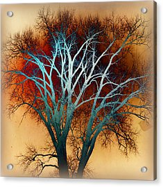 Freaky Tree 1 Acrylic Print by Marty Koch