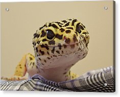 Freckles The Smiling Leopard Gecko Acrylic Print by Chad and Stacey Hall