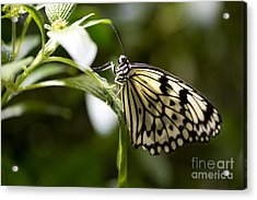 Acrylic Print featuring the photograph Fred by Leslie Leda