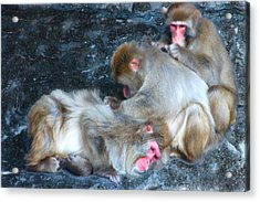Free Buffet And Grooming Acrylic Print