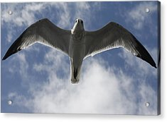 Freedom Acrylic Print by Natalija Wortman