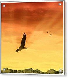 Freedom Of The Eagle #eagle #abstract Acrylic Print