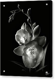 Freesia In Black And White Acrylic Print