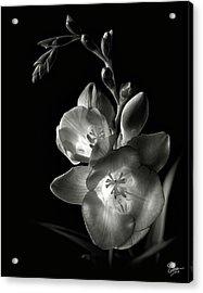 Freesia In Black And White Acrylic Print