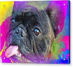 French Bulldog Acrylic Print by Char Swift