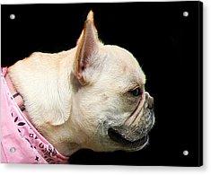 French Bulldog Acrylic Print by Ritmo Boxer Designs