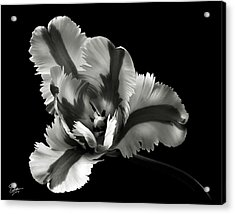 French Tulip In Black And White Acrylic Print
