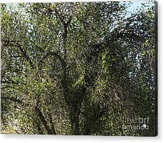 Fresco Tree Acrylic Print