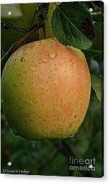 Fresh Apple Acrylic Print by Susan Herber