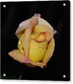 Fresh As The Morning Dew Acrylic Print