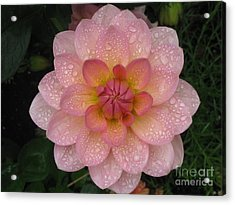 Acrylic Print featuring the photograph Fresh by Tina Marie