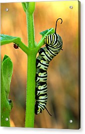 Friends Acrylic Print by Donna Caplinger