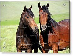 Acrylic Print featuring the photograph Friends by Fran Riley