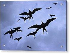 Frigate Birds In Flight. Lighthouse Acrylic Print by Ron Watts