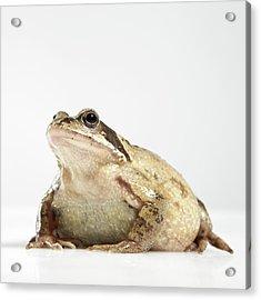 Frog Acrylic Print by Darren Woolridge Photography - www.DarrenWoolridge.com